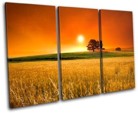 Field Sunset Landscapes - 13-2212(00B)-TR32-LO